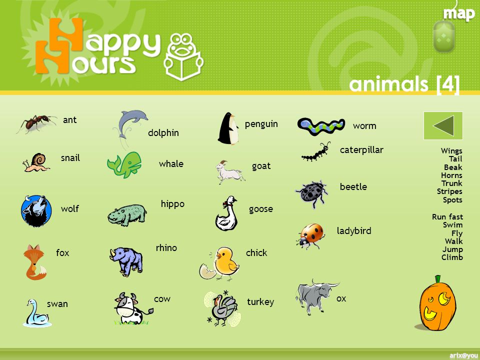 animals [4] ant penguin worm dolphin caterpillar snail whale goat